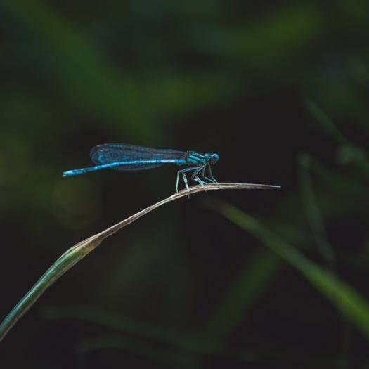 Qu'est-ce qui tue les insectes ?