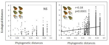 Figure 3. Mimicry drives microhabitat niche convergence among ithomiine butterflies © MNHN
