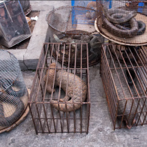 Traffic animaux sauvages en cage