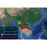 Geographic distribution of the four Rhinolophus species found positive for viruses closely related to SARS-CoV-2 in southern China and Southeast Asia.