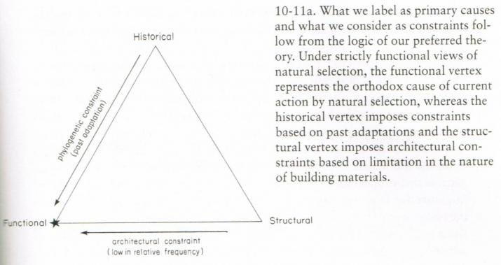 The aptive triangle, from Gould (2002) © MNHN