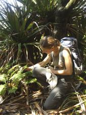 Collecting Ctenitis maritima in La Réunion (endemic to the Mascarenes) © L. Echternacht